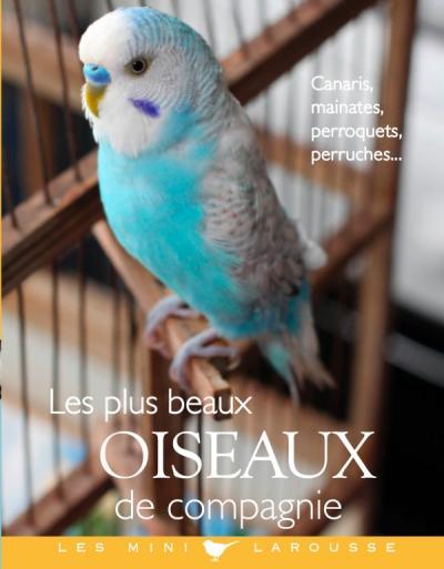 Les plus beaux oiseaux de compagnie