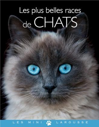 Les plus belles races de chats
